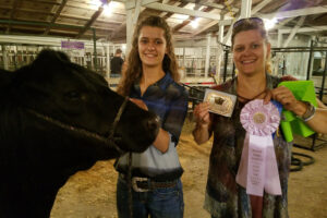 Open heifer show at Inter-State Fair