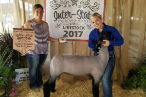 Sheep show held at Inter-State Fair