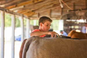 Spring steer and heifer jackpot to be held in Coffeyville