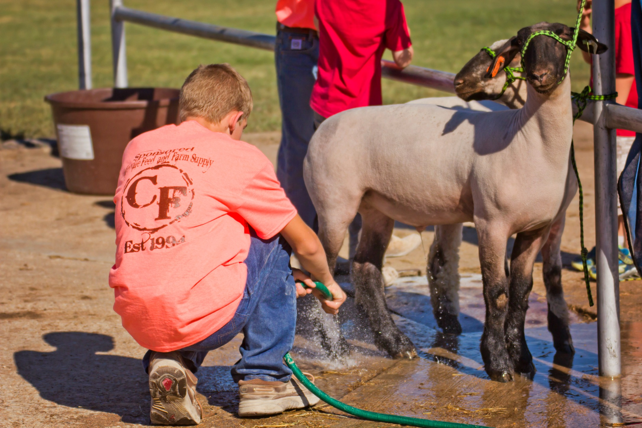 Making it better for the kids, livestock show changes benefit youth