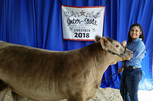 Market steer, junior heifer show results