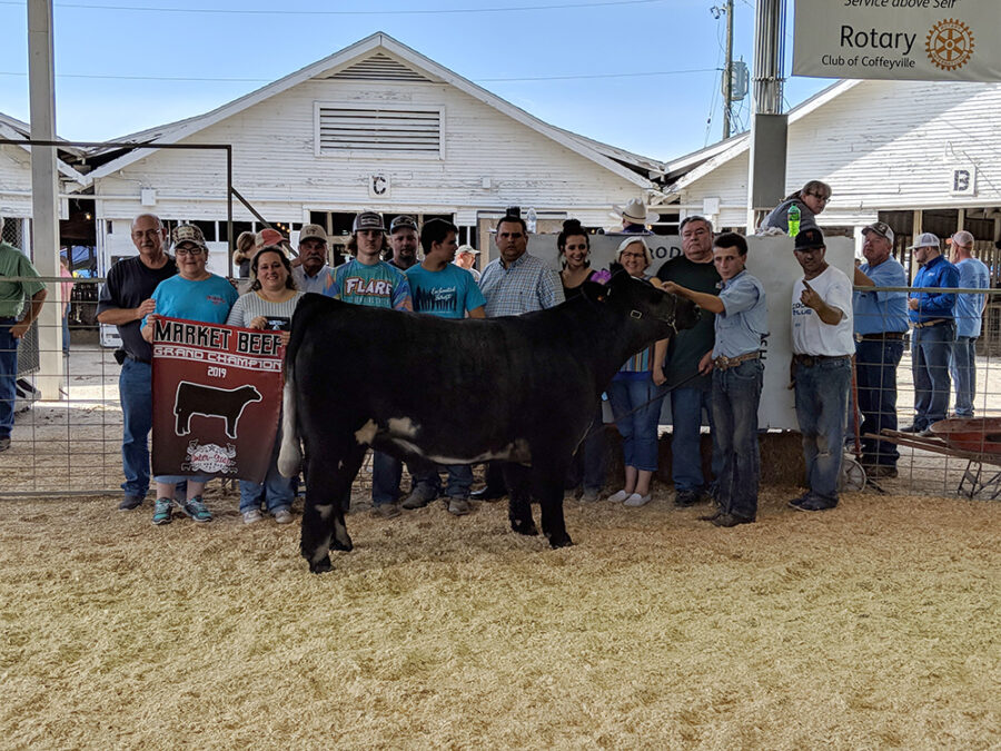 MARKET STEER SHOW RESULTS